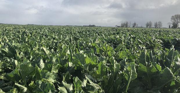 HT Agronomics Agworld crop Beets